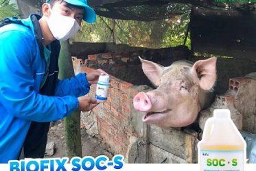 Sử dụng hóa chất trong việc xử lý mùi hôi chuồng trại nên hay không?
