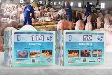 Giải pháp chuẩn để kiểm soát mùi hôi và ô nhiễm từ chuồng trại nuôi heo